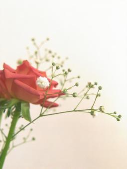 Green interior rose