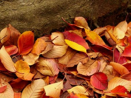 Fallen leaves and root