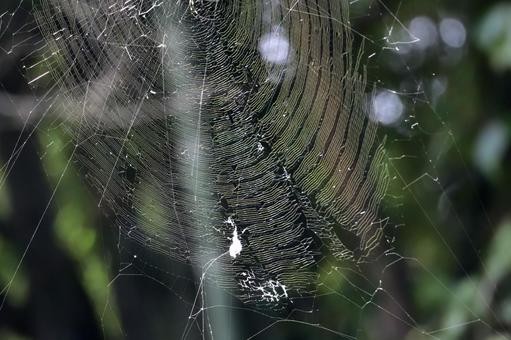 Brilliant spider web