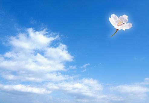 푸른 하늘에 벚꽃 한송이