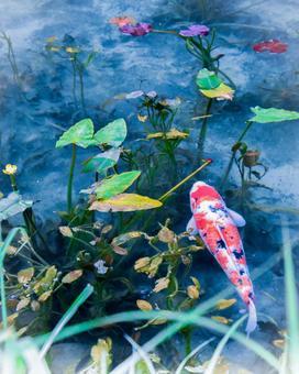 모네의 연못의 잉어