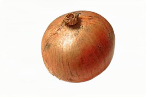 Onion # 1