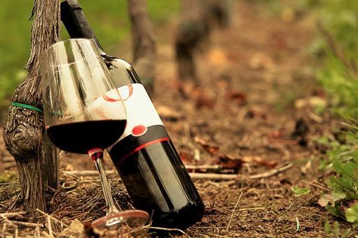 Vine and wine 3