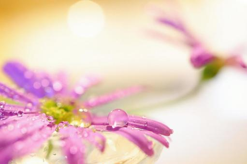 Glitter background of flowers and water relaxing image