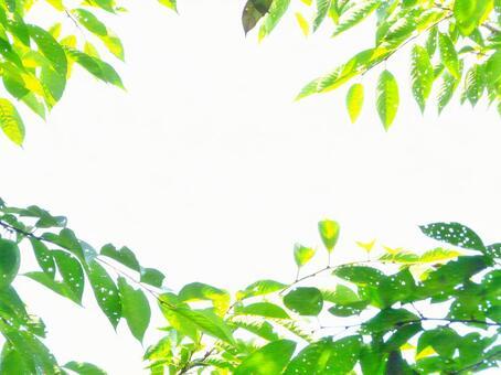 Sunbeams Green worm-eaten