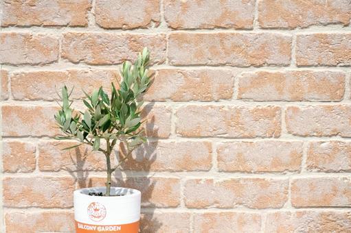 Brick wall and olive tree
