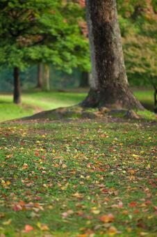 낙엽 33