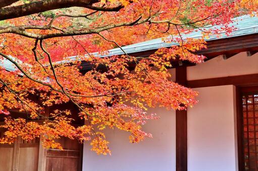 Maple autumn leaves autumn maple autumn wallpaper