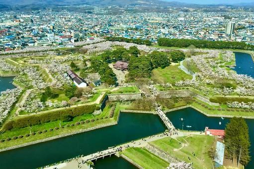 Hakodate, Goryokaku Sakura