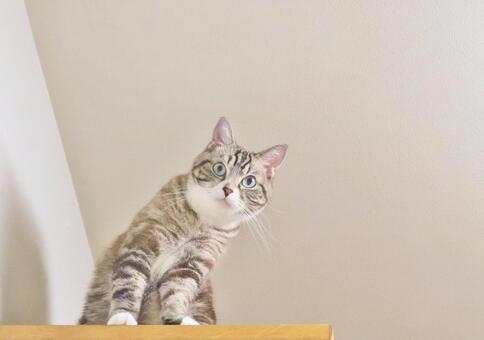 고양이 고양이 고양이 응시 고양이 내려다 고양이 보는 고양이
