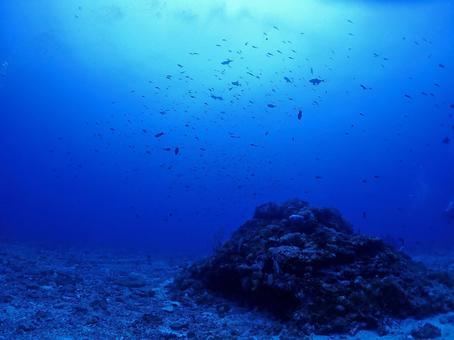 Mysterious night undersea / Okinawa / Kerama Islands