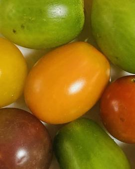 Color tomatoes (6)