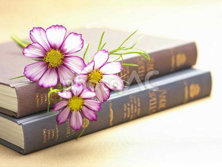 コスモスと本の写真