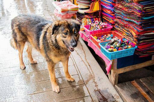 마추피추 마을의 가게에 있던 개