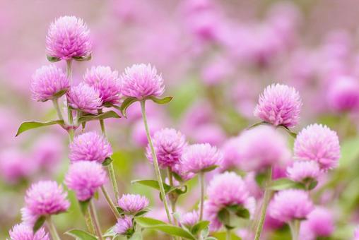 Autumn flower garden