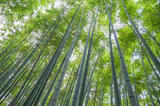 Kyoto Arashiyama bamboo grove