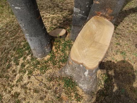 공원의 수목의 벌채