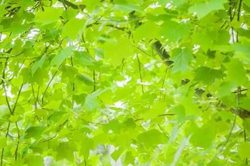 Fresh green image