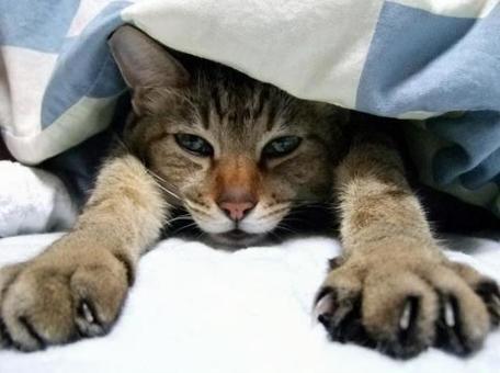 이불에서 나가고 싶지 않는 고양이