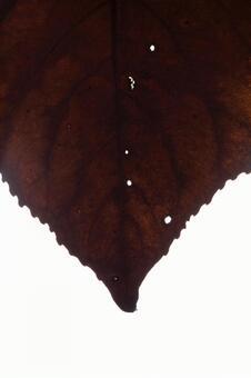 낙엽 잎 시설 6