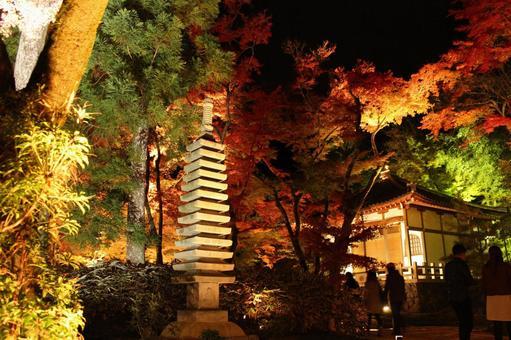 Hogon-in Autumn Light Up