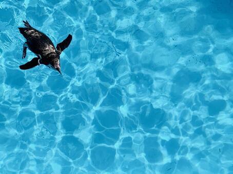 One aquarium swimming penguin