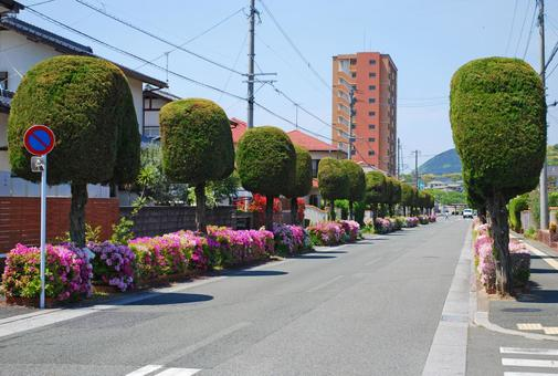 Roadside trees in the residential area of Showa 2