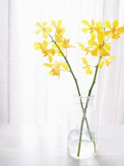 Living with flowers Mokara