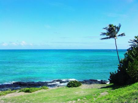 Hawaiian sea and palm tree landscape, blue sky