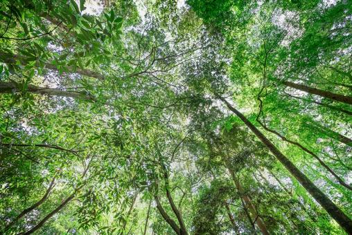 Image photo of beautiful forest