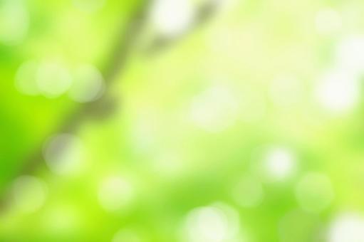 Forest blur background