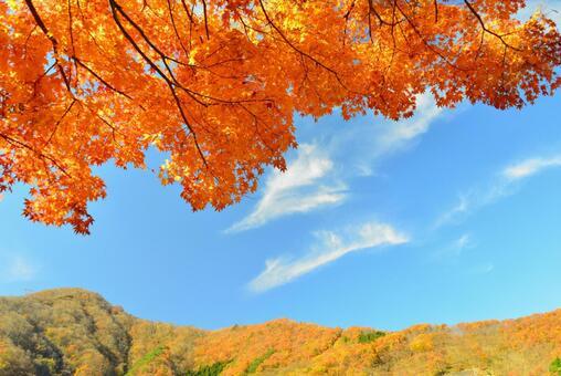 가을 한창 단풍