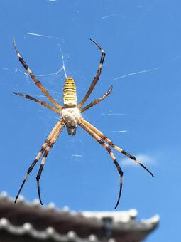A spider from the sky