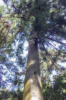 숲의 나뭇잎 사이로 비치는 햇빛 4