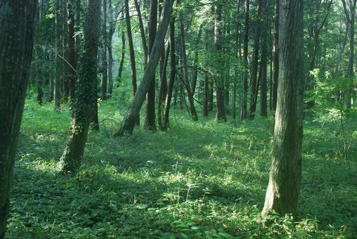Trees_Forest_67