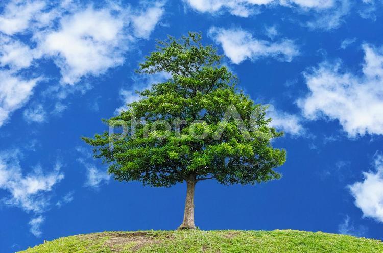 一本の木の写真