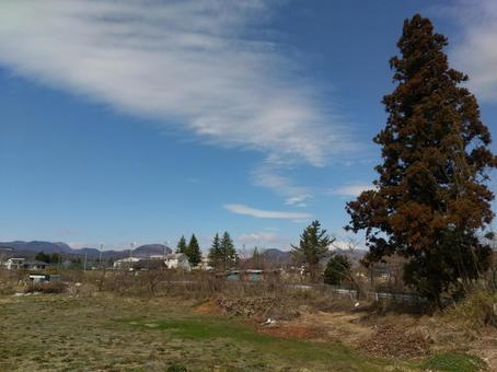 후쿠시마시 飯坂町平野 침엽수와 푸른 하늘