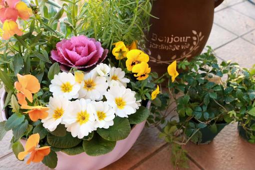 Colorful flower set planting gardening potted plant