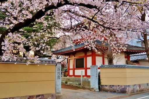 Sakura and Arai Yakushi