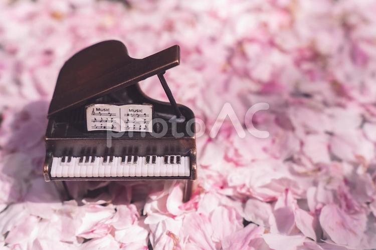 桜の花びらとピアノ の写真