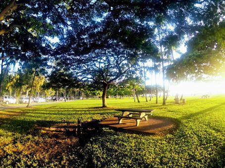 Hawaii park scenery