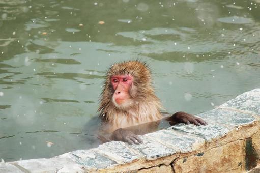 눈 오는 날 노천탕에 들어가는 원숭이