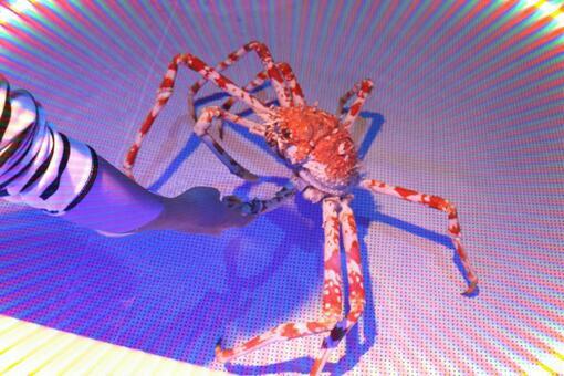 螃蟹和握手2