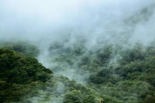 山霧, 신록