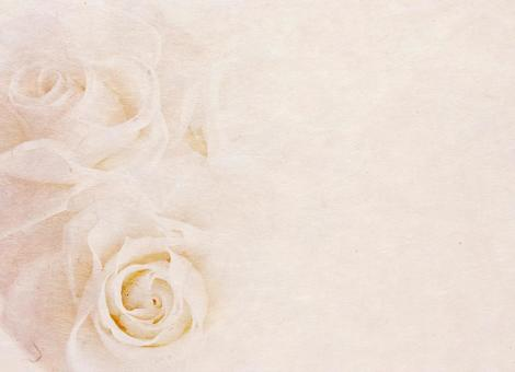Rose _ Japanese paper _ background