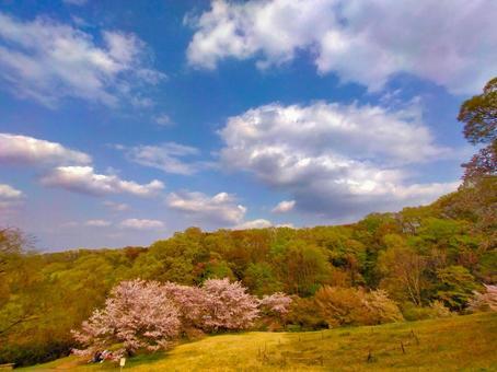 봄의 나가 누마 공원 신록과 벚꽃
