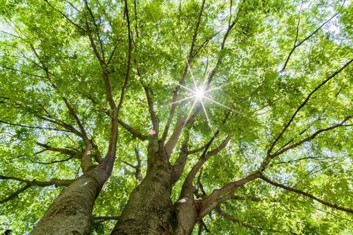 Tree trees through the tree