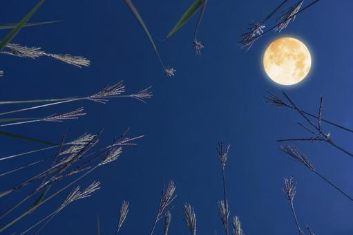 Fifteen nights Full moon and Japanese pampas grass scenery 3