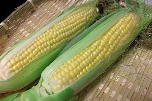 Corn 2 # 5