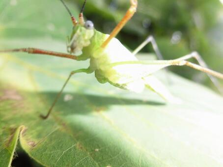 Grasshopper's gym